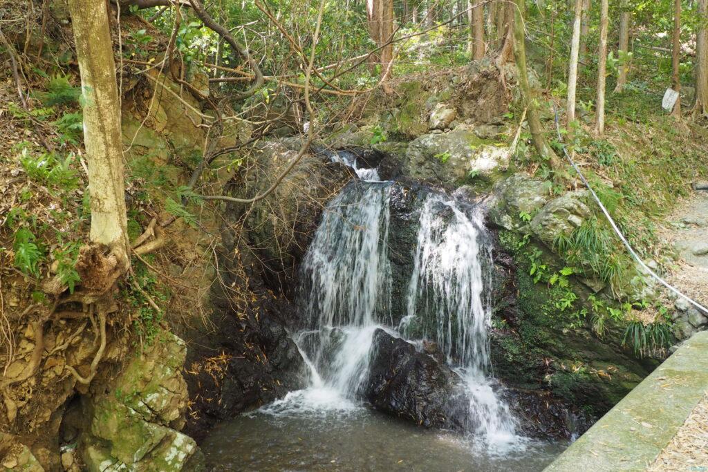 白藤の滝1