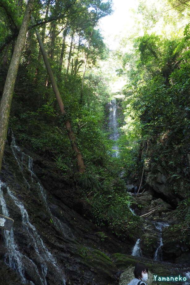 白藤の滝2021年