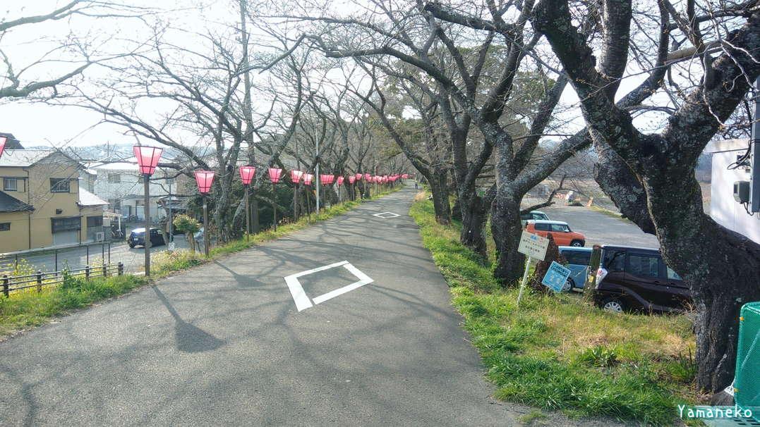 瀬戸川 金比羅山 桜
