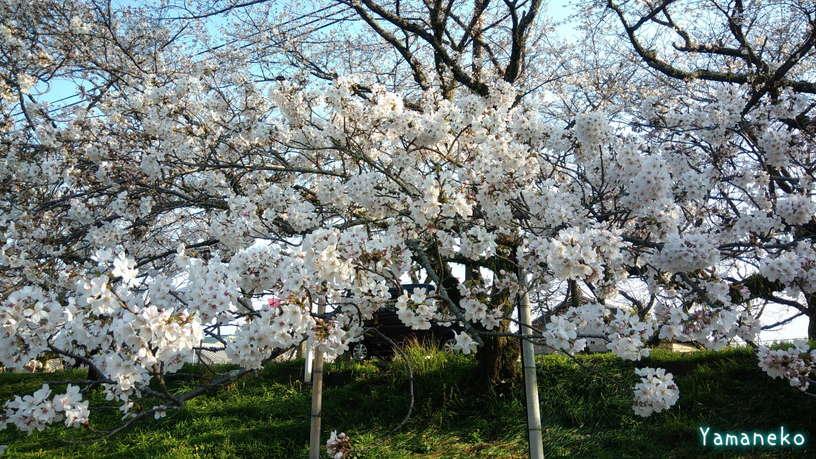 瀬戸川標本木